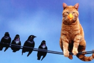 funny-cat-on-a-wire-in-disguise-445x299