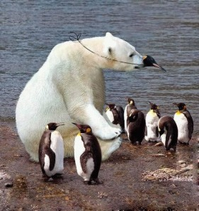 Funny-photo-polar-bear-penguin-nose-disguise
