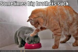 385d5_funny-pictures-cat-has-annoying-big-brother
