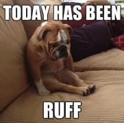funny-sad-dog